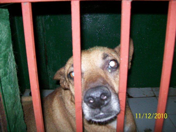 Denuncias por maltrato animal (5/6)